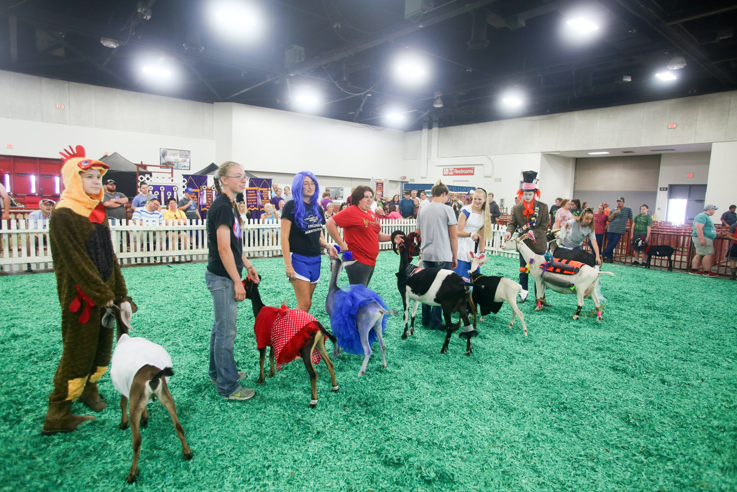 Image of West Hall Show Ring